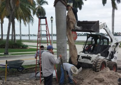 palm-relocation-1