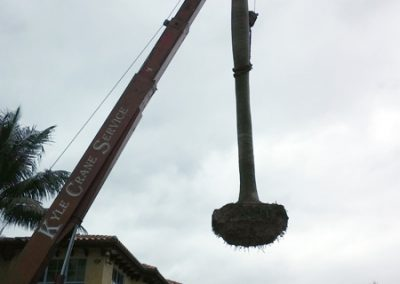 palm-relocation-2